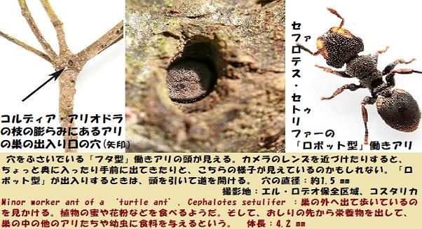 アリの巣-2