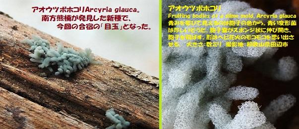 変形菌-2