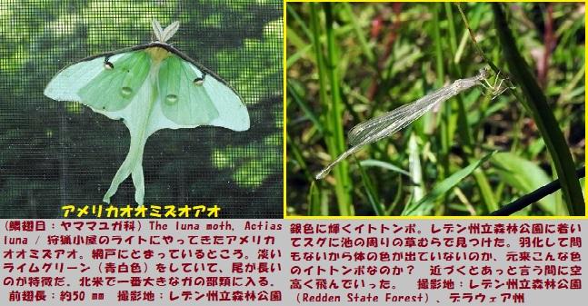 昆虫博-1