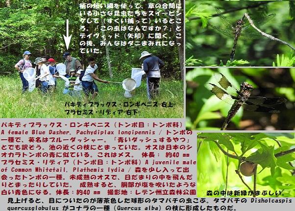 昆虫博-3