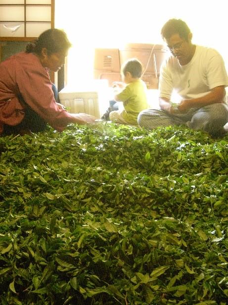 りんねしゃの農薬不使用我が家のお茶