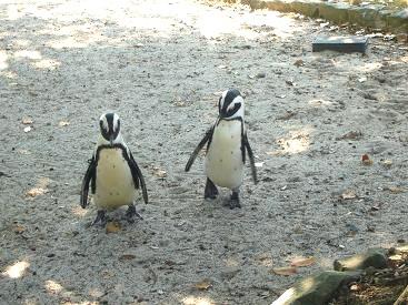 ペンギンさん (^o^)丿