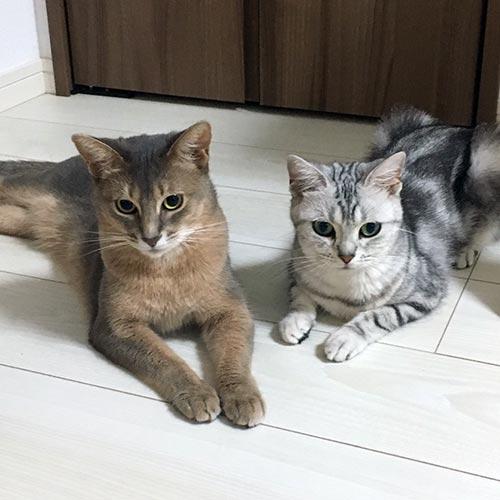 猫の母性本能