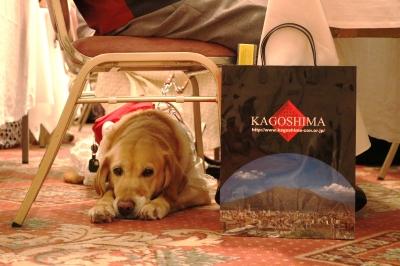 盲導犬と鹿児島の紙袋