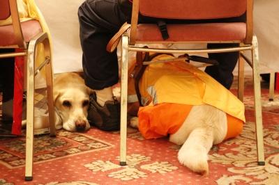 足元でくつろぐ盲導犬