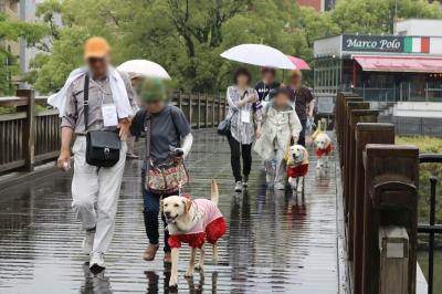 雨の中の急ぎ足