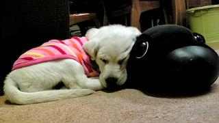 おねむ黒犬と.jpg