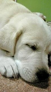 天使の寝顔2.jpg