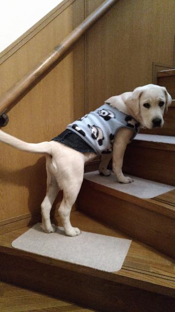 階段上がるよ1.jpg