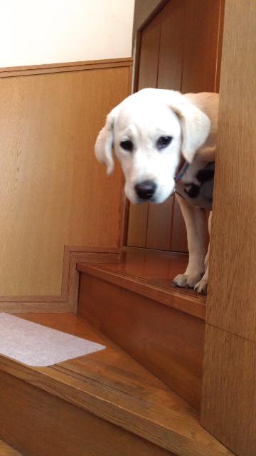 1階段下りるよ.jpg