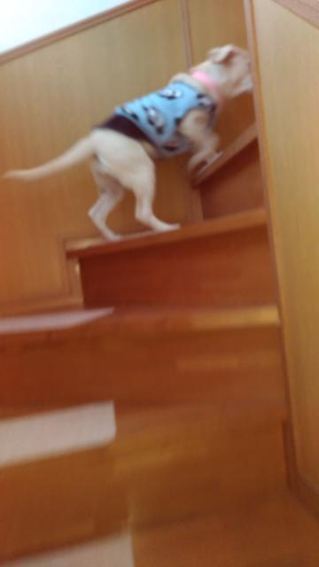 3階段上がるよ.jpg