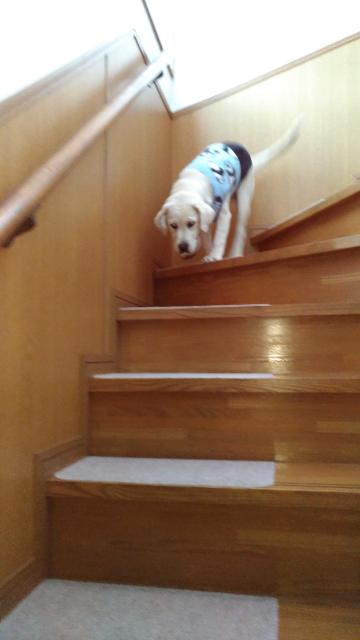 4階段下りるよ.jpg