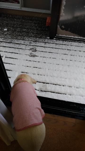 初雪6.jpg