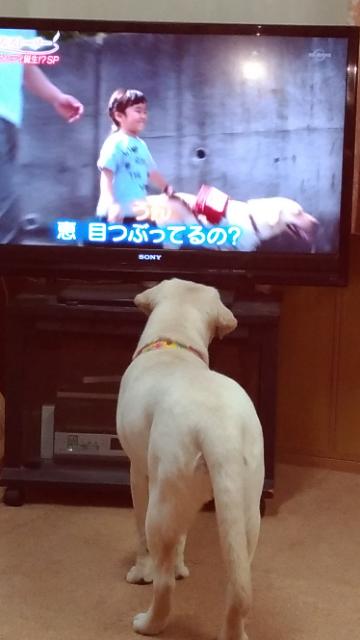 テレビっ子2.jpg