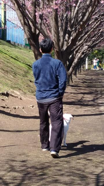蜂須賀桜2.jpg