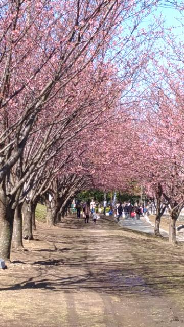 蜂須賀桜3.jpg