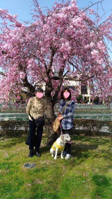 おばあちゃんとお花見1.jpg