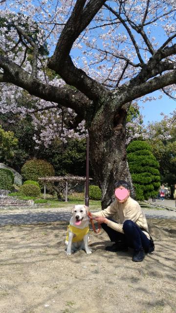 おばあちゃんとお花見2.jpg