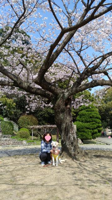 おばあちゃんとお花見3.jpg