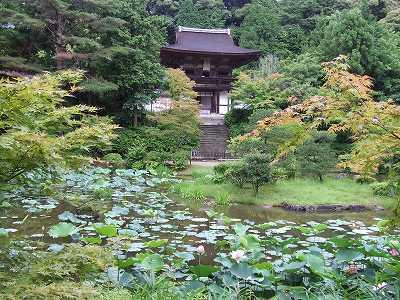 苑池から桜門を眺める