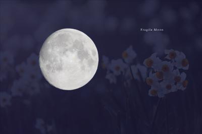 moon+水仙