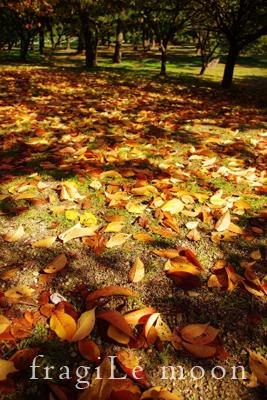 公園枯れ葉