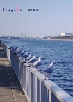 水路の鳥a