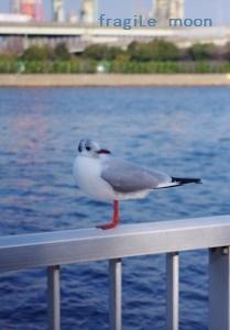 水路の鳥b