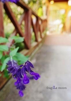 """""""そら""""の薄紫花S"""