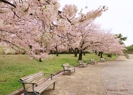 2-17桜14カラー修正