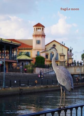 ポルトヨ−ロッパ河畔の鳥