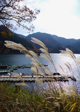 銀山湖2016秋3