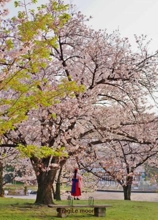 2018桜・浜寺公園2