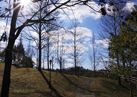 ハーベストの丘2