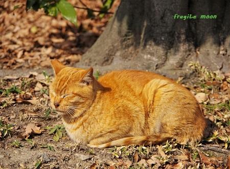 荒山公園ネコ