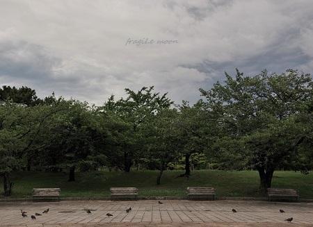 梅雨空@浜寺公園2