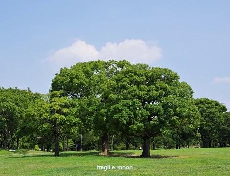 大仙公園3