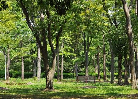 大仙公園4