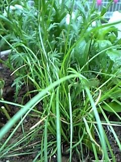 寄せ植え丸鉢2