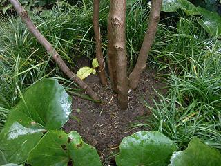 チューリップの植え付け場所