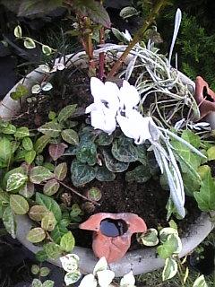 寄せ植え丸鉢