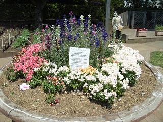 JA東京むさし 三鷹緑化センター 花壇