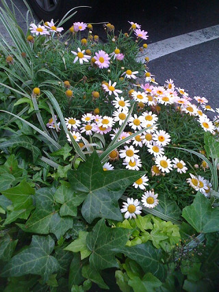 渋谷の植物