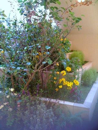 成田空港内でディスプレイされていた植物