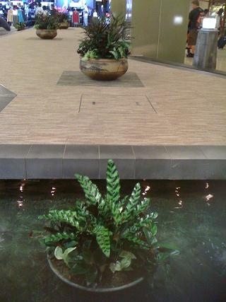 成田空港内の植物