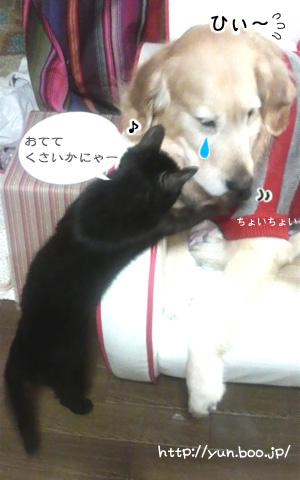お手手クサイかにゃ〜