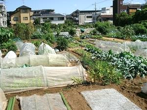 9月の区民農園