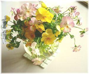 ビオラの生花