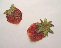 イチゴの押し花