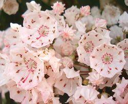 パラソルみたいな花
